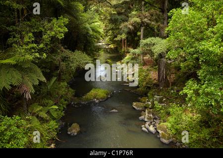 Hatea River below Whangarei Falls, Whangarei, Northland, North Island, New Zealand - Stock Photo