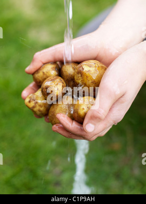 Womans hands washing potatoes under water - Stock Photo