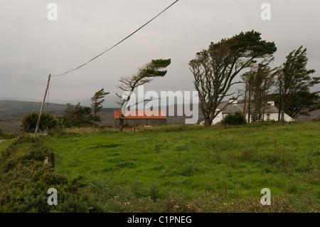 Republic of Ireland, County Cork, Crookhaven, windswept trees - Stock Photo