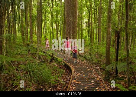People on boardwalk, Trounson Kauri Park, Northland, North Island, New Zealand - Stock Photo