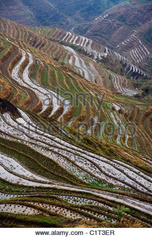 Dragons Backbone Rice Terraces, Longji Titian, Guilin, Guangxi, China - Stock Photo