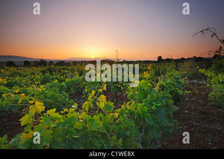 Sunrise in vineyard, island Hvar - Stock Photo