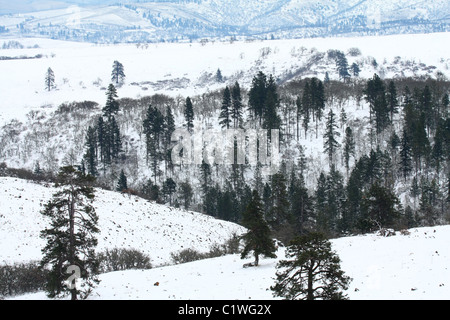 40,600.03205 Snowy winter day with snow accenting the mixed leafless oaks and green ponderosa pine forests scattered - Stock Photo