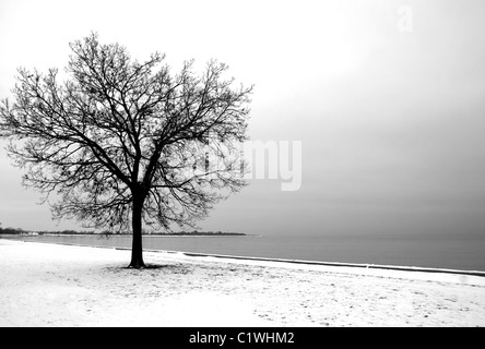 Winter tree with no leaves with snow around next to Michigan lake in Chicago - Stock Photo