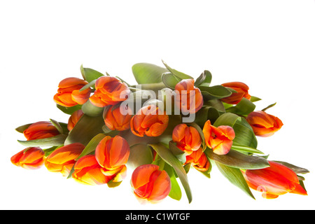 orange tulips  for easter and dutch queensday - Stock Photo