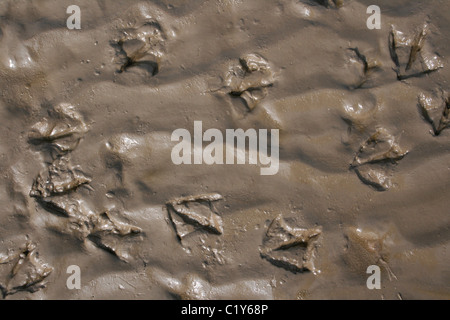 Seagull Footprints In Wet Sand Taken At Ainsdale, Merseyside, UK - Stock Photo