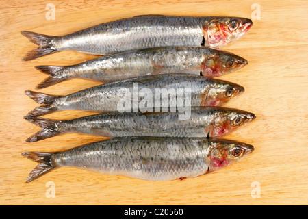 Sardines on wooden board - Stock Photo