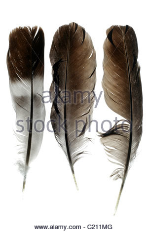 three different bird feathers - Stock Photo