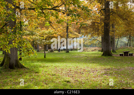 Autumn in the Forest of Dean at Wenchford, Gloucestershire, England, UK - Stock Photo