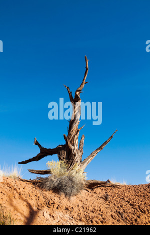 An old tree snag and rabbitbrush on a hillside of macrobiotic soil, Arches national Park, Utah, USA. - Stock Photo