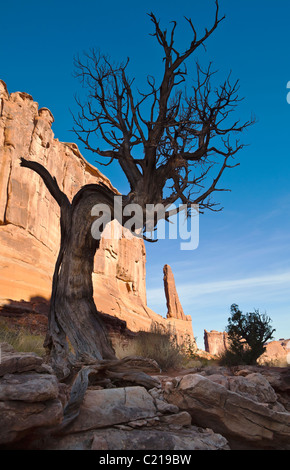 An old dead Juniper tree along 'Broadway' in Arches National Park, Utah, USA. - Stock Photo