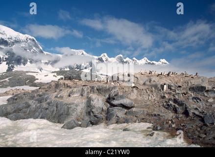 Gentou Penguin Colony On Rocks Near The Seven Sisters, Port Lockroy, Antarctica. - Stock Photo