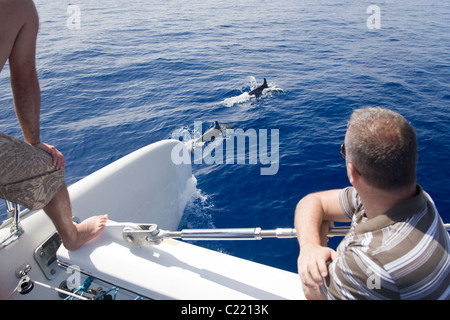 People watching dolphins surface in front of a catamaran off Funchal, Madeira, during a dolphin watching excursion. - Stock Photo