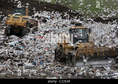 bulldozer landfill gulls Palo Alto Baylands Park - Stock Photo