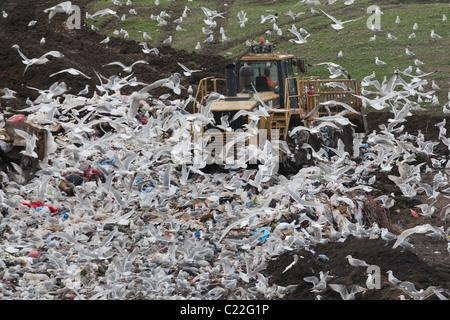 bulldozer landfill gulls Palo Alto Baylands Park Calfornia - Stock Photo