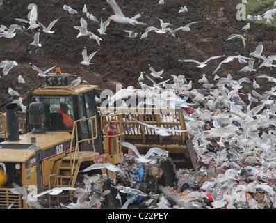 bulldozer landfill gulls Palo Alto Baylands Park California - Stock Photo