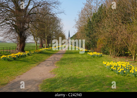 The daffodil lined TPT Wentworth Rotherham South Yorkshire England UK