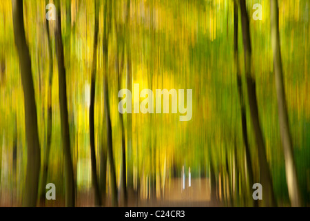 PHOTOPAINTING autumn impressions in forest - Stock Photo