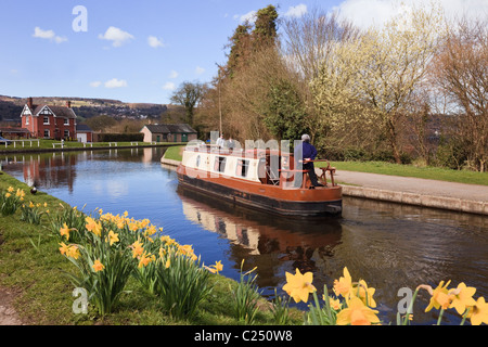 Narrowboat navigating the Llangollen canal with daffodils in spring. Froncysyllte, Wrexham, North Wales, UK, Great - Stock Photo