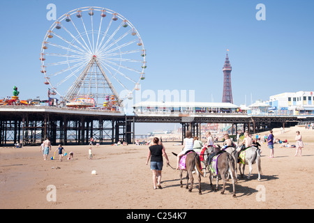 Donkeys on the sand at Blackpool Beach in Lancashire, England, UK - Stock Photo