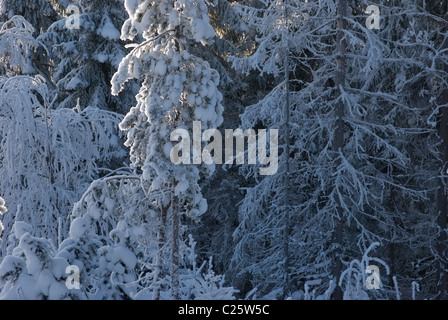 Dusk in the snowy forest - Stock Photo