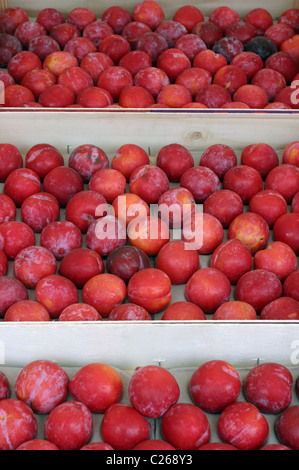 Red Plums on a Market Stall - Stock Photo