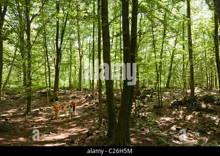 Family walking in beech forest Fageda d'en Jorda Olot Garrotxa region Catalunya Spain