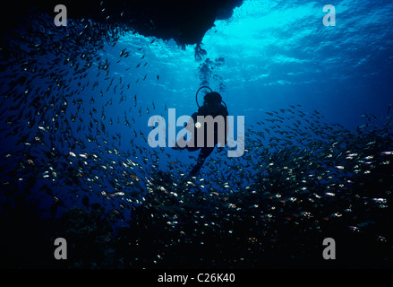 Diver at cave entrance & Glassy Sweepers. Red Sea - Egypt - Stock Photo