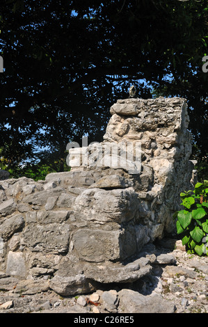 Green Iguana atop Mayan Ruins in Playa Del Carmen Mexico - Stock Photo