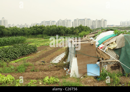 Farm and Vegatable Fields. Pudong, Shanghai, China. Farmers house in front, apartment buildings in distance. - Stock Photo