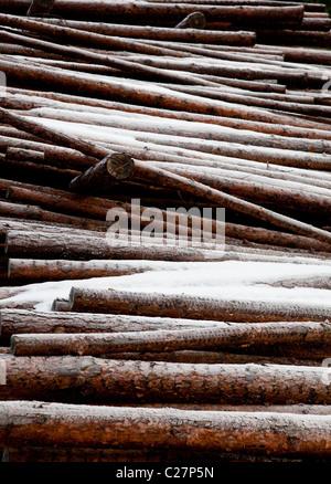 Pine ( pinus sylvestris ) log pile - Stock Photo