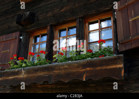 traditional swiss dark wooden house  with window shutter and crane's bill flowers, snow covered mountains reflect - Stock Photo