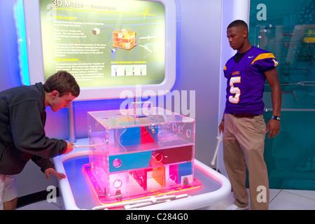 Endoscope display at the Gulf Coast Exploreum Science Center in Mobile, Alabama, USA. - Stock Photo