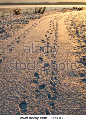 A dog and its owner leave tracks in newly-fallen snow. - Stock Photo
