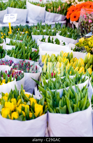 Flowers for sale on a market stall in the Netherlands - Stock Photo