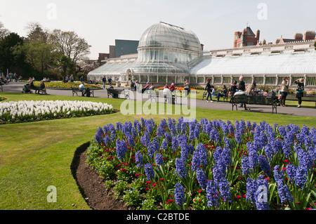 Victorian Palm House, Botanic Gardens, Belfast - Stock Photo