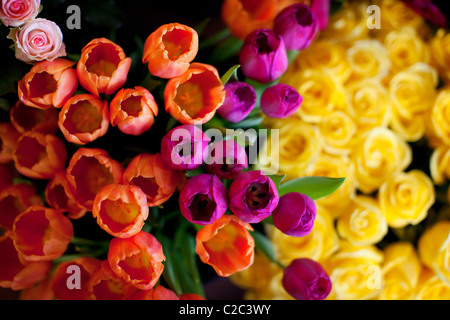 Tulips and Roses - Stock Photo