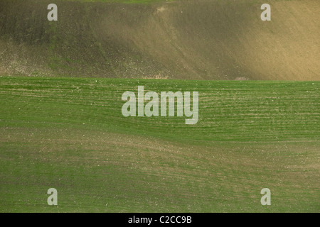 Sprouts of grain in an open field forming a shape of a wave - Stock Photo