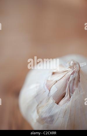 Garlic bulb on Olive wood board - Stock Photo