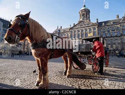 Amsterdam, the Netherlands. Draft horse and carriage in front of the Royal Palace on Dam Square - Stock Photo