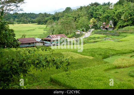 Rice terraces and traditional houses, Tana Toraja, South Sulawesi, Indonesia - Stock Photo
