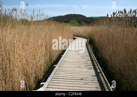 Wooden Boardwalk Running Through The Reedbed At Conwy RSPB Nature Reserve, Wales - Stock Photo