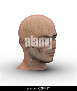 Male head with skull and brain showing through transparent skin. - Stock Photo