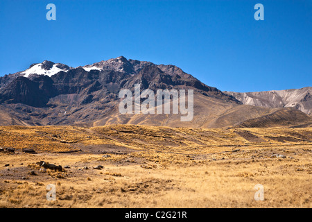 Altiplano or High Plain or Plateau of the Andes near Puno on Lake Titicaca in Peru, South America - Stock Photo