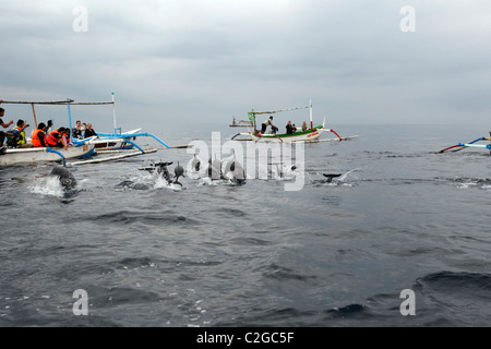 Dolphin watching, Bali, Indonesia, March 2011 - Stock Photo