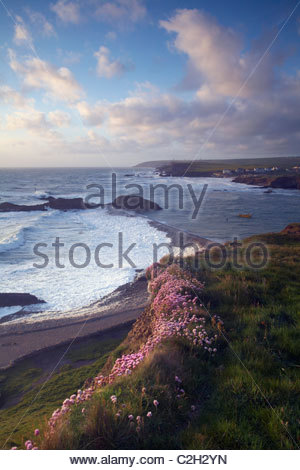 Bude breakwater at high tide and flowering thrift, Bude, North Cornwall, England, UK - Stock Photo