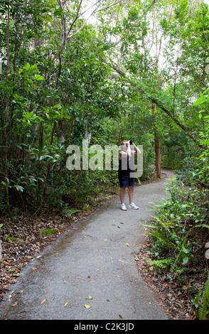 Birdwatching at the Gumbo Limbo Trail, Everglades National Park, Florida - Stock Photo