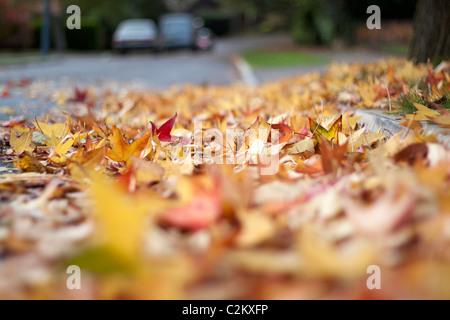Autumn leaves on the roadside - Stock Photo