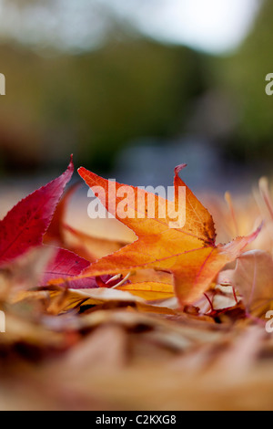 Autumn leaves lying on the ground - Stock Photo