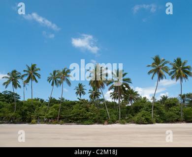 Palm trees on beach, Boipeba Island, Bahia, Brazil - Stock Photo